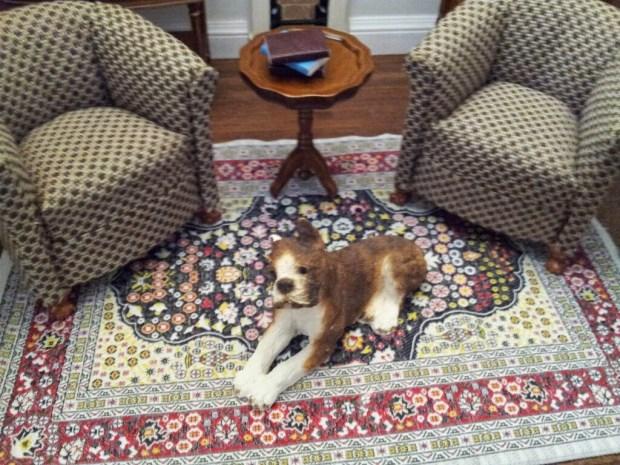 Bastian - my chipped ear dog.